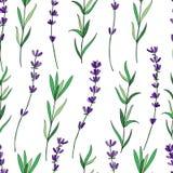 Modèle floral de vecteur sans couture, fleur graphique tirée par la main de lavande, texture décorative, croquis d'isolement sur  Photographie stock