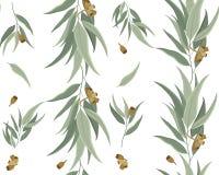 Modèle floral des feuilles et des graines d'eucalyptus Photo stock