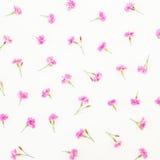 Modèle floral des fleurs roses sur le fond blanc Configuration plate, vue supérieure Photos libres de droits