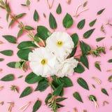 Modèle floral fait de fleurs blanches avec des feuilles sur le fond rose Fond floral Configuration plate, vue supérieure Photographie stock libre de droits