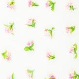 Modèle floral fait de fleurs et feuilles roses sur le fond blanc Configuration plate, vue supérieure Photographie stock