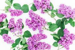 Modèle floral fait de lilas et feuilles sur le fond blanc Configuration plate, vue supérieure Modèle floral d'été Images stock