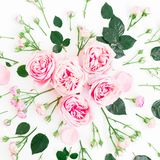 Modèle floral fait de roses, bourgeons et feuille roses sur le fond blanc Configuration plate, vue supérieure Photo libre de droits