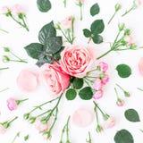 Modèle floral fait de roses, bourgeons et feuilles roses sur le fond blanc Configuration plate, vue supérieure Fond de beauté Images libres de droits