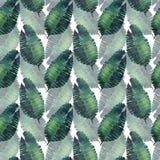 Modèle floral merveilleux tropical de fines herbes vert clair d'été d'Hawaï d'une aquarelle de palmettes de monstera de tropique Photo libre de droits