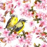 Modèle floral répété sans couture - fleurs roses de cerise, de Sakura et de pomme watercolor illustration de vecteur