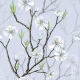 Modèle floral sans couture Photographie stock libre de droits
