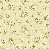 Modèle floral sans couture avec de petites roses blanches Photo stock