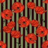 Modèle floral sans couture avec des fleurs de pavot Images libres de droits