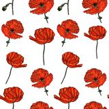 Modèle floral sans couture avec des fleurs de pavot Image stock