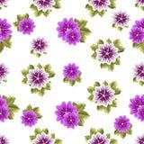 Modèle floral sans couture avec des mauves Images stock