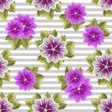 Modèle floral sans couture avec des mauves Photos libres de droits
