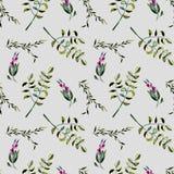 Modèle floral sans couture avec les baies et les branches d'arbre pourpres d'acacia Photographie stock