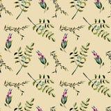 Modèle floral sans couture avec les baies et les branches d'arbre pourpres d'acacia Photo stock