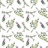 Modèle floral sans couture avec les baies et les branches d'arbre pourpres d'acacia Images libres de droits