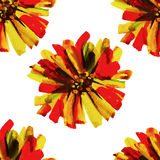 Modèle floral sans couture 12 d'aquarelle Images libres de droits