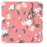Modèle floral sans couture sur le fond rose-clair avec des fleurs, des branches d'un Apple-arbre et des pommes dans des tons en p Photo stock