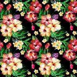 Modèle floral tropical sur un noir L'aquarelle peinte fleurit le plumeria photos stock