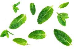 Modèle frais de feuilles en bon état d'isolement sur le fond blanc, vue supérieure Photos stock
