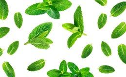 Modèle frais de feuilles en bon état d'isolement sur le fond blanc, vue supérieure Images stock