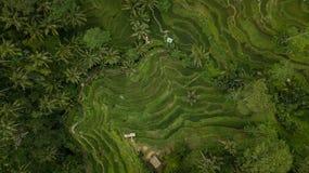 Modèle géométrique dans des domaines de riz dans Bali, Indonésie image stock