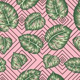 Modèle géométrique sans couture de vecteur avec les feuilles vertes de monstera sur le fond rose photos stock
