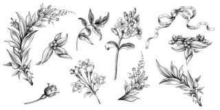 Modèle gravé victorien d'ornement floral de frontière de cadre de rouleau baroque de cru de fleur le rétro a monté vecteur en fil illustration libre de droits