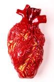 Modèle humain d'argile de coeur Concept médical de fond blanc Images libres de droits
