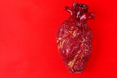Modèle humain d'argile de coeur Concept médical de fond rouge Photos libres de droits
