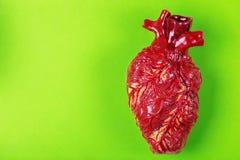 Modèle humain d'argile de coeur Concept médical de fond vert Photographie stock