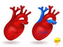 Modèle humain de coeur Photo libre de droits