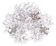 Modèle humain de l'hémoglobine 3D Image libre de droits