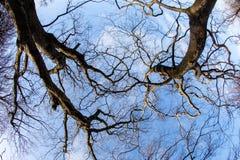 Modèle intéressant de branches d'arbre Photos stock