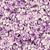 Modèle lilas sans couture pour le textile, les tissus, scrapbooking et le web design Fleurs colorées Image libre de droits
