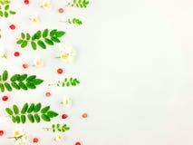 Modèle lumineux coloré des feuilles, des baies et des fleurs Photos libres de droits