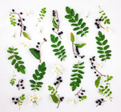 Modèle lumineux coloré des feuilles, des baies et des fleurs sur le fond blanc Configuration plate Image libre de droits