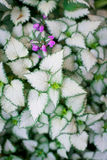 Modèle merveilleux sur le hosta en nature Photographie stock