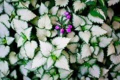 Modèle merveilleux sur le hosta en nature Images stock