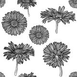Modèle monochrome sans couture de camomille illustration stock