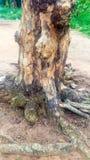 Modèle mort de tronc d'arbre images libres de droits
