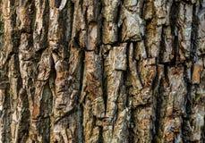 Modèle naturel convexe d'eco de texture d'abrégé sur en bois fond photo stock