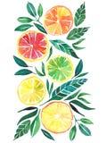Modèle orange de pamplemousse de citron d'agrume tropical lumineux Photo libre de droits