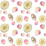 Modèle régénérateur avec l'agrume et les pétales de rose Modèle sans couture d'aquarelle sur le fond blanc, fait main illustration stock