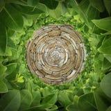 Modèle radial de roche et d'arbuste photos stock