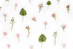 Modèle romantique fait de fleurs roses et feuilles vertes de brunnera Image stock