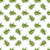 Modèle sans couture élégant avec des feuilles d'eucalyptus illustration de vecteur