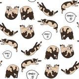 Modèle sans couture avec des chats de sommeil Images stock