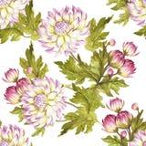 Modèle sans couture avec des chrysanthèmes Illustration d'aquarelle d'aspiration de main Photo stock