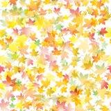 Modèle sans couture avec des feuilles d'érable d'automne vecteur abstrait d'illustration de fond Photos stock