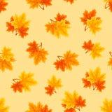 Modèle sans couture avec des feuilles d'érable d'automne Illustration de vecteur Images libres de droits